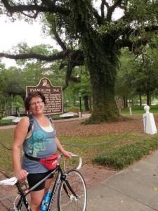 The Evangeline Oak is important in American literature. (Photo: Tom Adkinson)