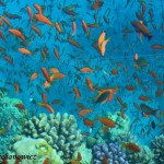 Soma Bay Fishe